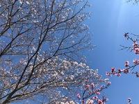 秋葉神社 (18).jpg