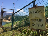 黄金 (4).JPG