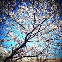 2013-04-23-14-50-36_deco.jpg