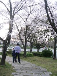 22.4.5花見 (8).jpg